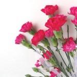 母の日の花の花言葉!おすすめの花束や鉢植えも紹介します!