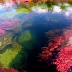 コロンビア5色の川キャノクリスタレスがイッテQ!で【画像】ツアーは?